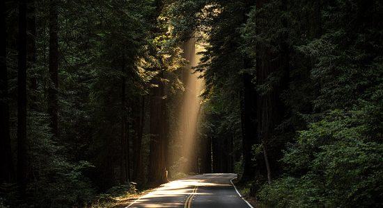 Trolsk skog, väg och ljus